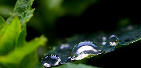 macro-natura.jpg